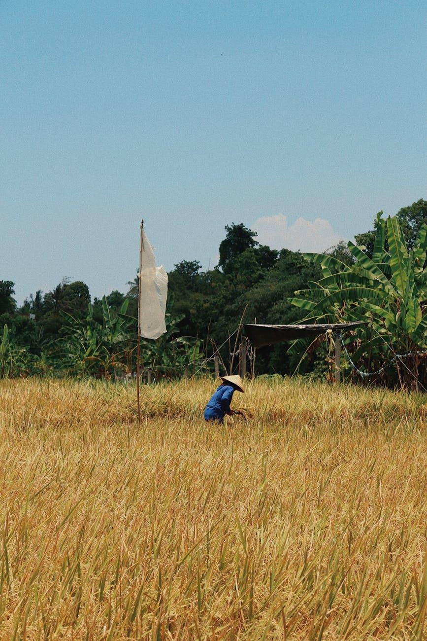 person in grass field